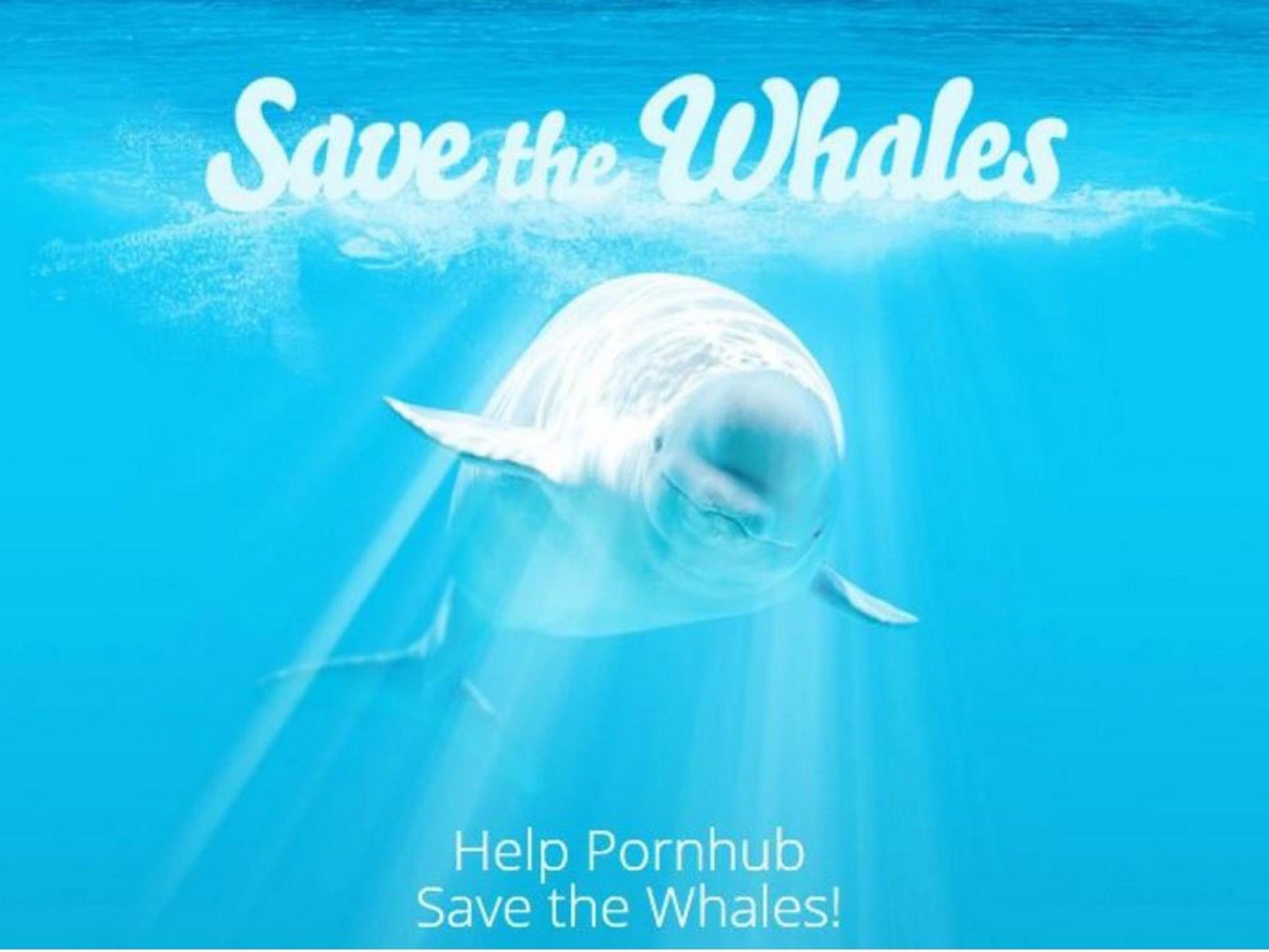 Save porn movies