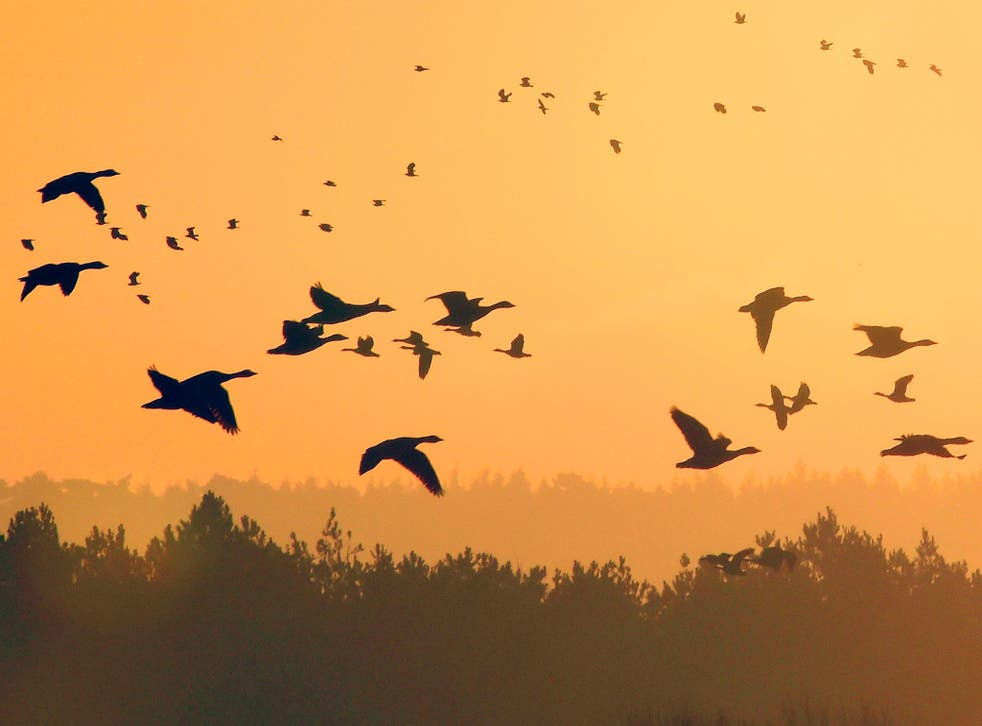 A group of people had leased private land to hunt a flock of geese