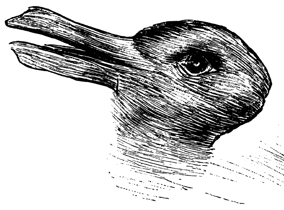 What do you see? A duck or a rabbit?
