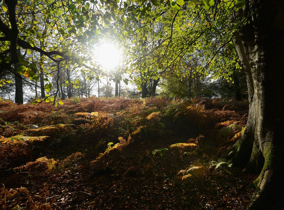 Sun shines through the trees during the autumn season in the New Forest