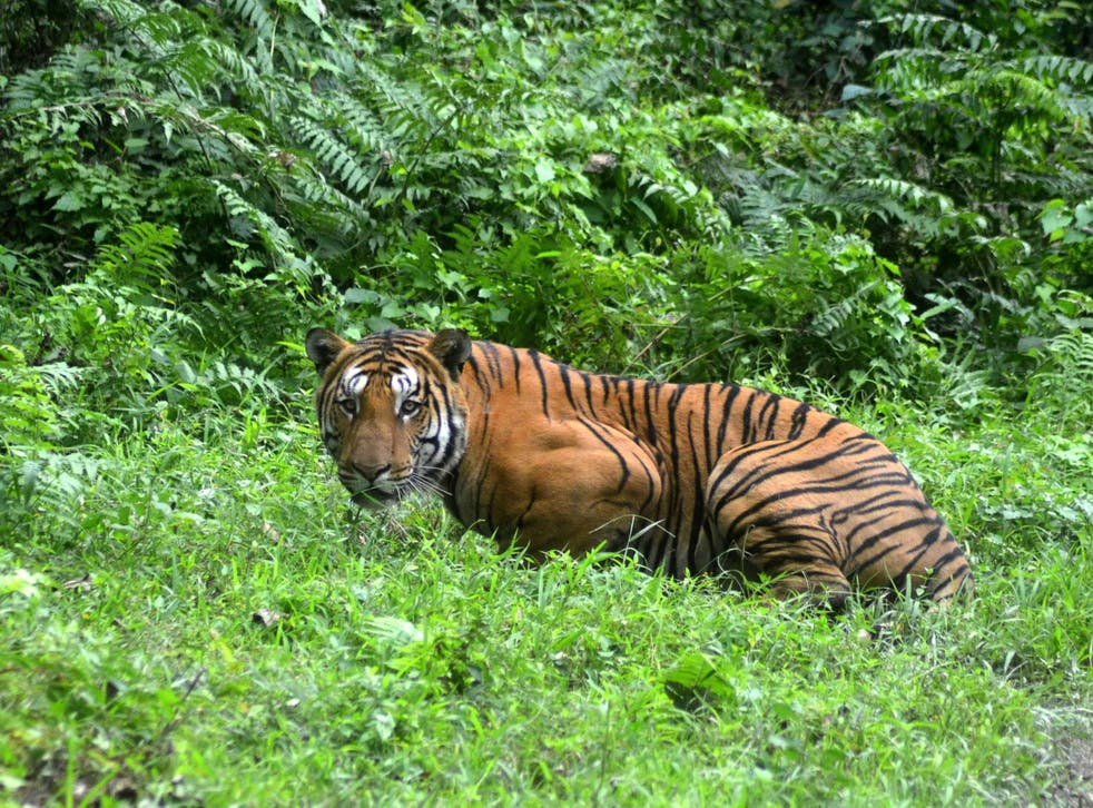 Gerard Van Laar and his Nepalese guide were attacked by a tiger in Bardia National Park