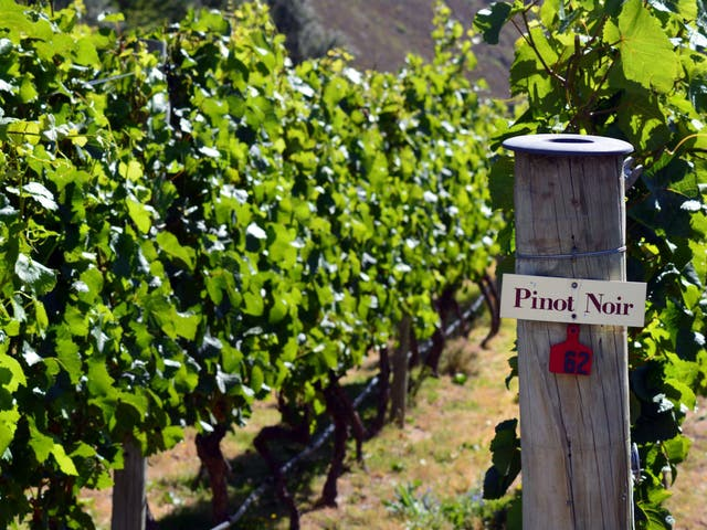 It was once thought that pinot noir in New Zealand was only good for sparkling wine
