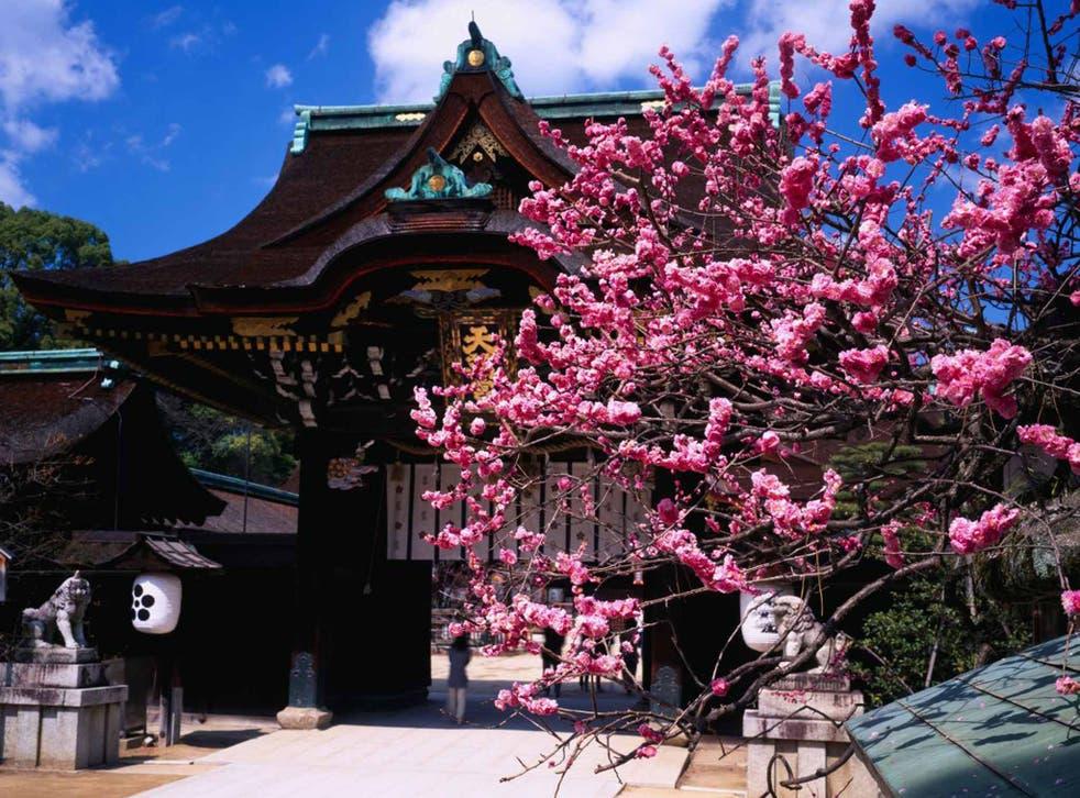 Petal power: plum blossom at Kitano TenmanguShrine