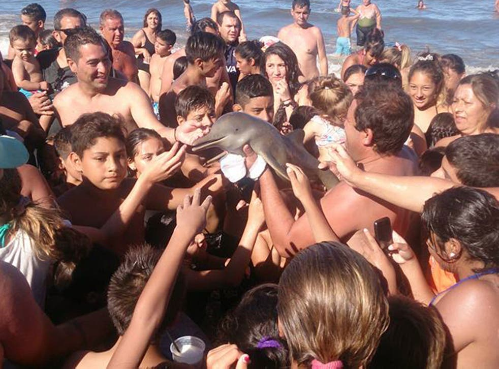 A Franciscan dolphin is passed around by beach-goers in Argentina - Hernan Coria/Facebook