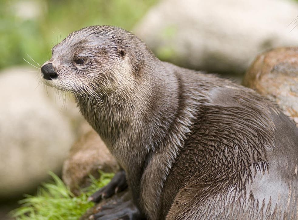 The zoo carried out an investigation into the death of the otter (file image)