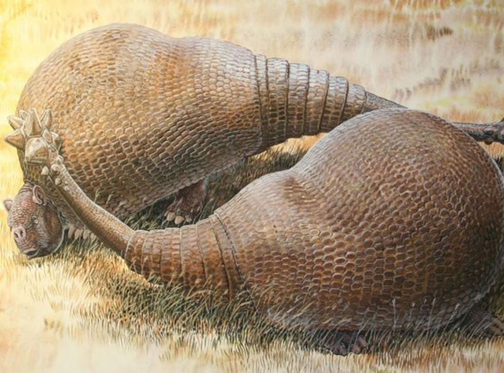 Glyptodonts were giant extinct cousins of modern armadillos that roamed South America