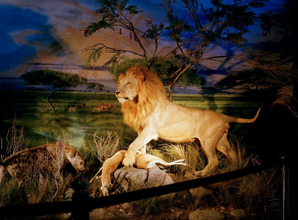 'Lion' by British photographer David Chancellor is shortlisted in the Professional Campaign category