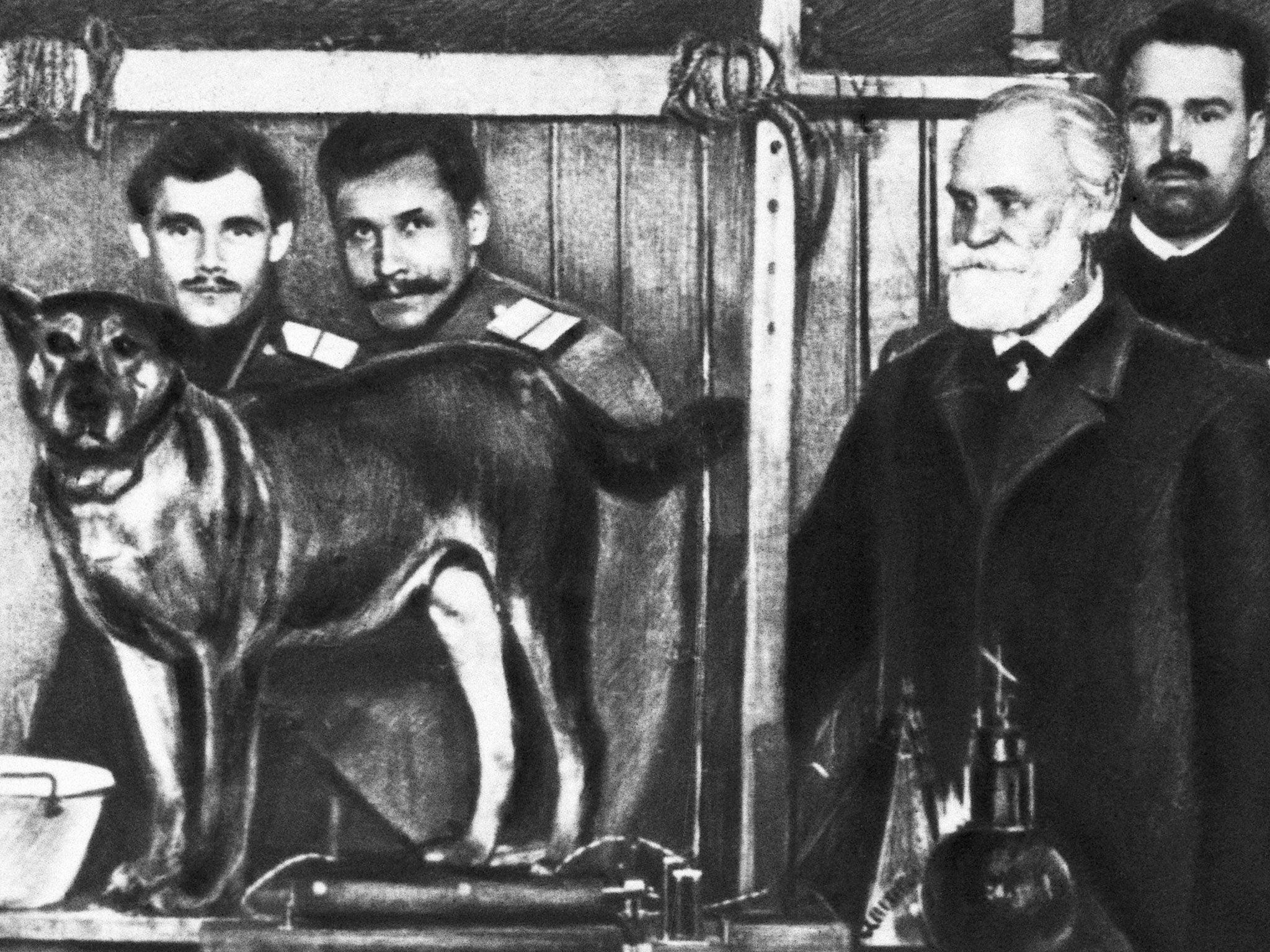 Resultado de imagem para pavlov