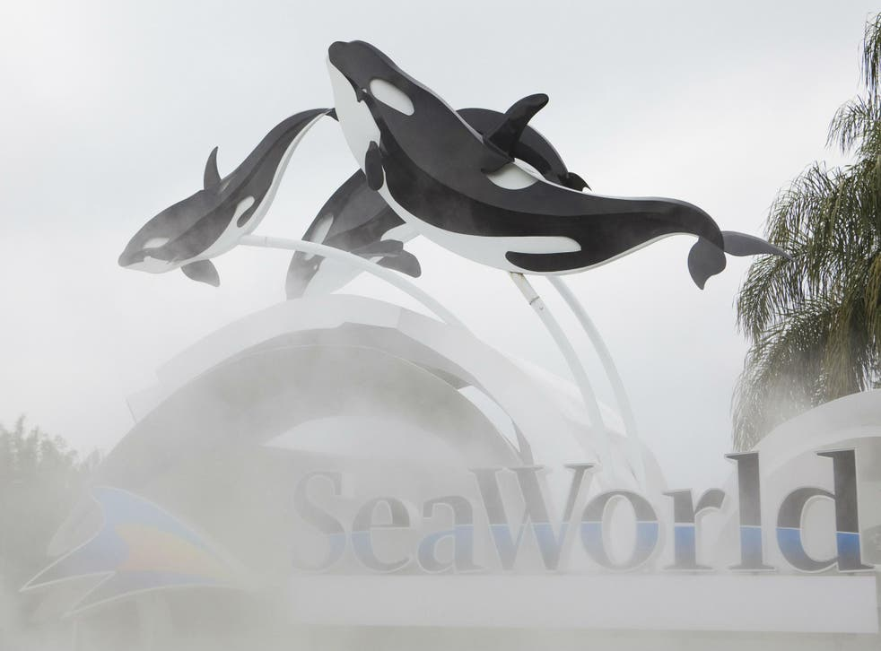 The 24 killer whales currently at the company's theme parks in California, Texas and Florida will be the last generation of orcas at SeaWorld