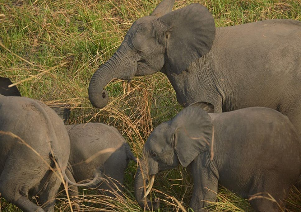 594c630722bbaa The fight against poaching  how we can save the elephant from ...
