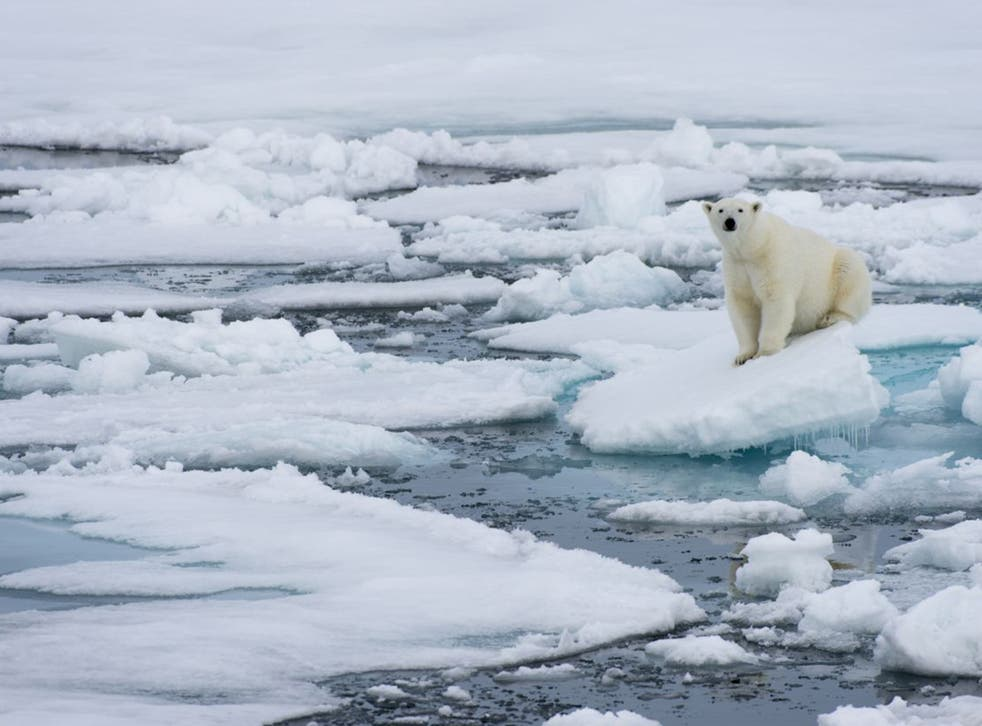 Sea ice is disappearing at an alarming rate