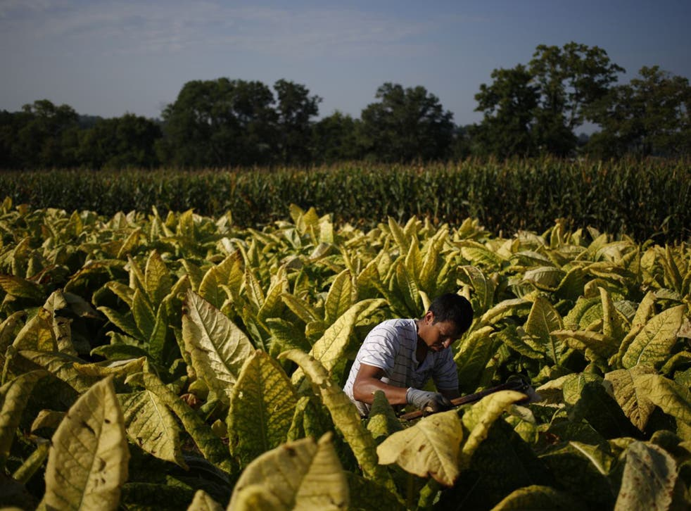Officials have allegedly been paid to disrupt rival tobacco producers