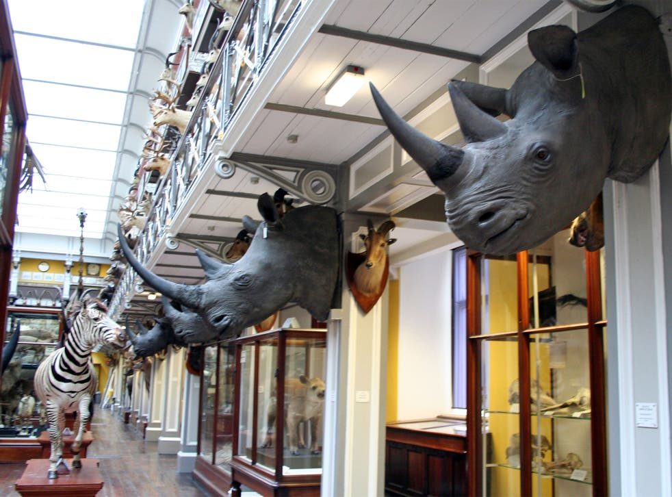 The Rathkeale Rovers cartel stole rhino heads worth £428,000 from storage in Ireland