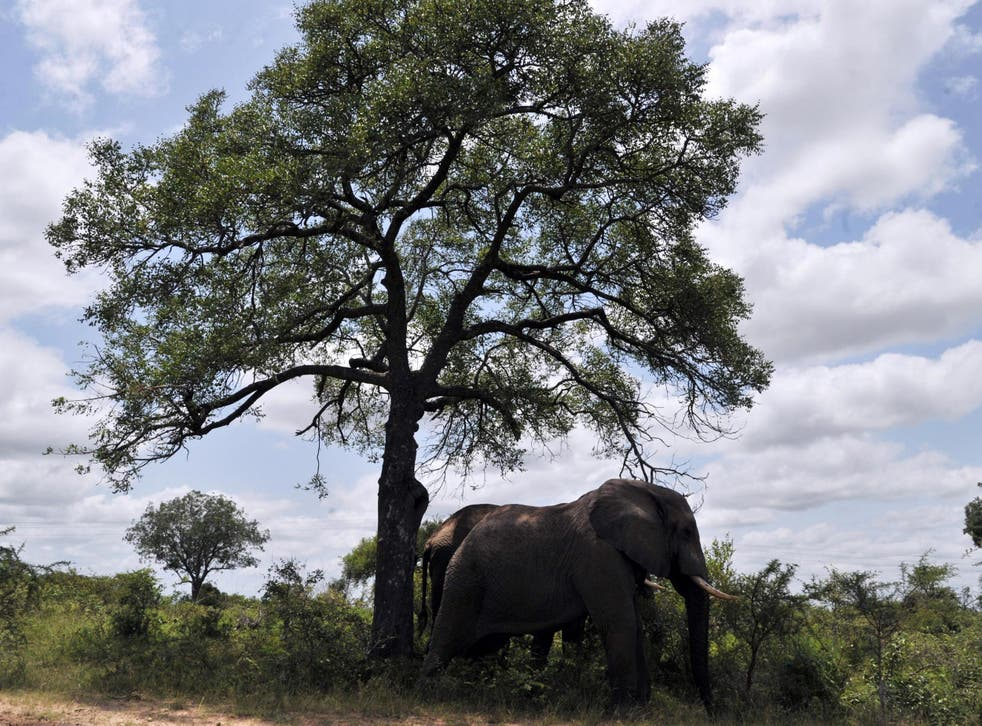 Kruger National Park is home to African elephants