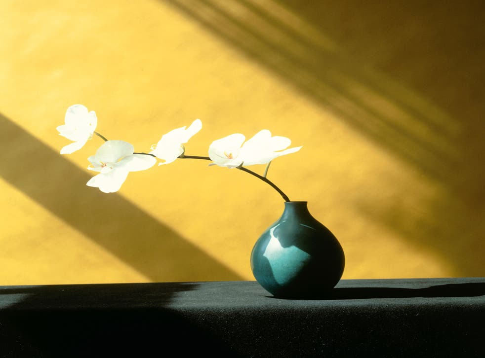 'Orchid', 1982