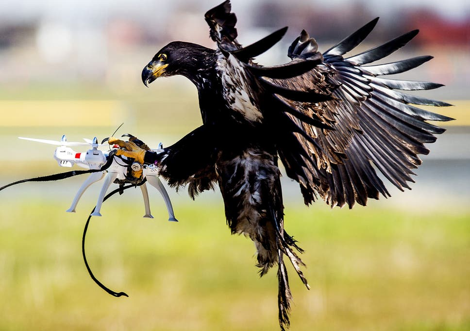 Is that a drone, coming to take your job? | The Independent