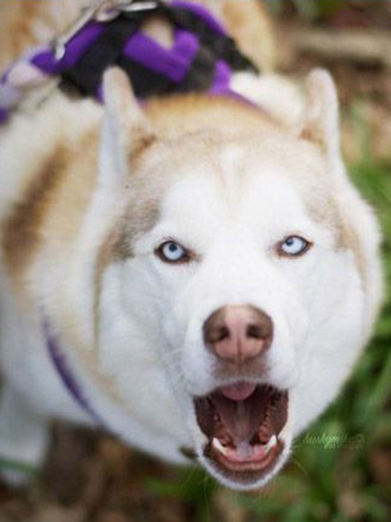 Dogs can understand human speech, scientists discover | The