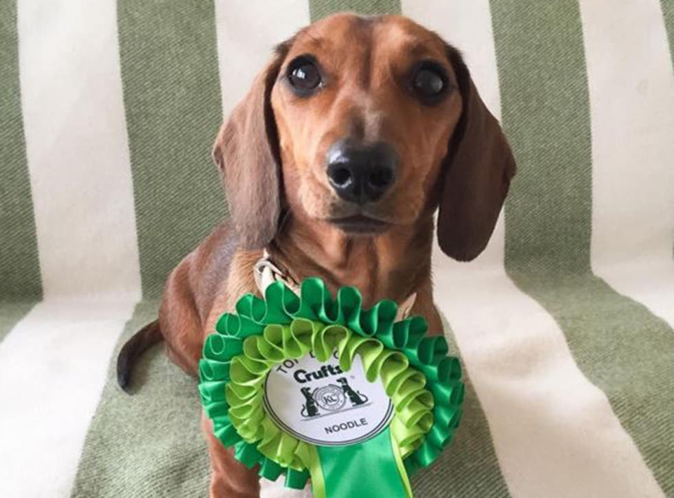 Lindsay Sanders, the owner of a miniature dachshund with more than 66,000 Instagram followers, said her two-year-old pet had received a warm welcome at Crufts from social media users.