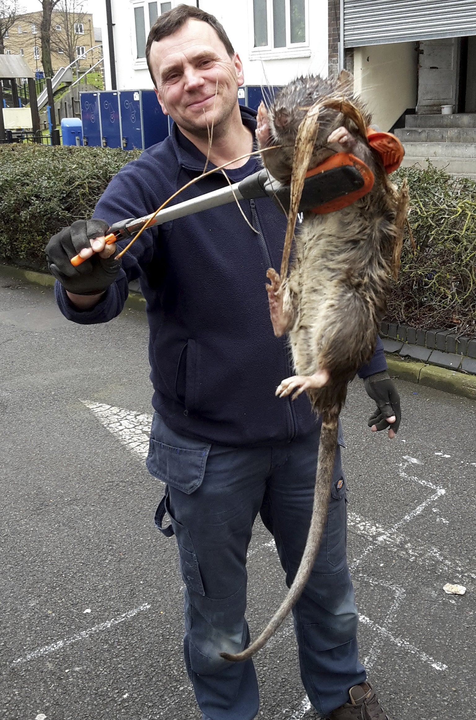 Giant Rat Found In London Gas Engineer Finds Rodent Bigger Than