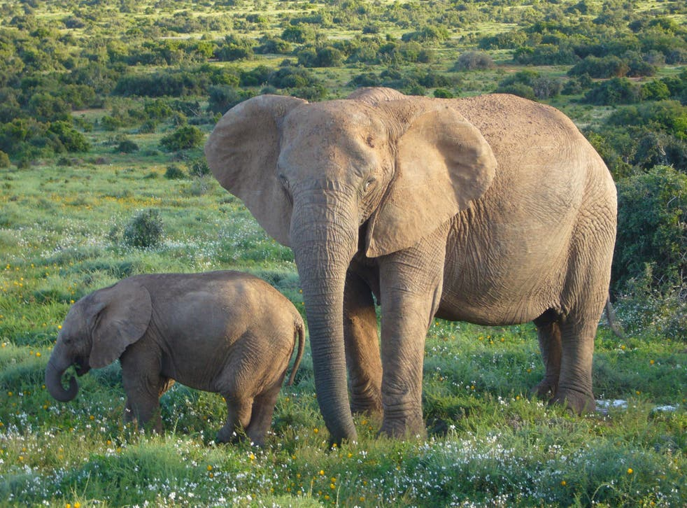 The elephants are aged between six and 25.