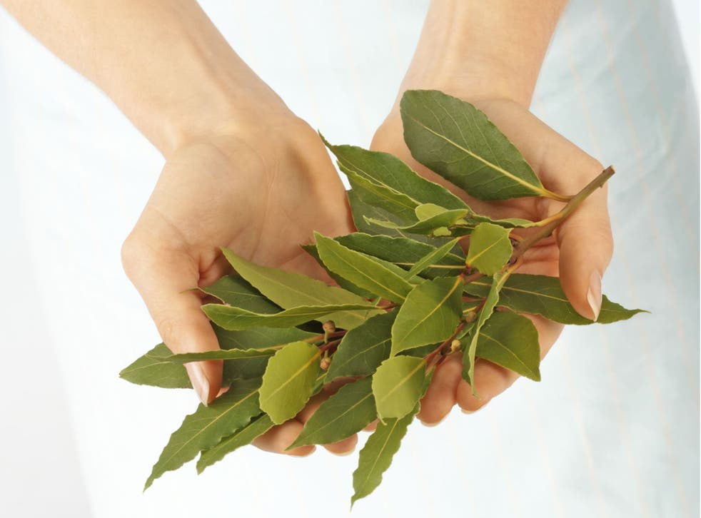 """One writer's quest to find """"a chef who is willing to be honest with me about bay leaves"""" has drawn a blank"""