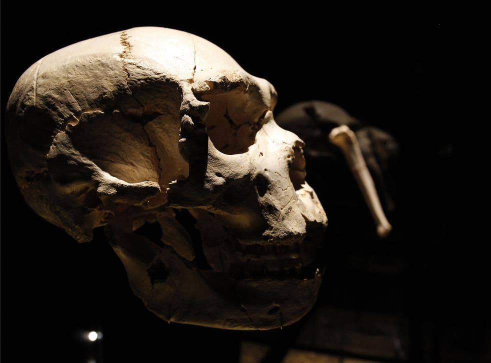 View of a skull of an adult Homo heidelbergensis, found in Sima de los Huesos