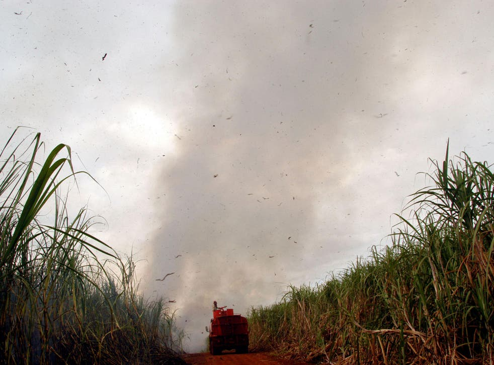 A sugar plantation in Patrocinio Paulista, in the prosperous countryside of the state of Sao Paulo, Brazil.