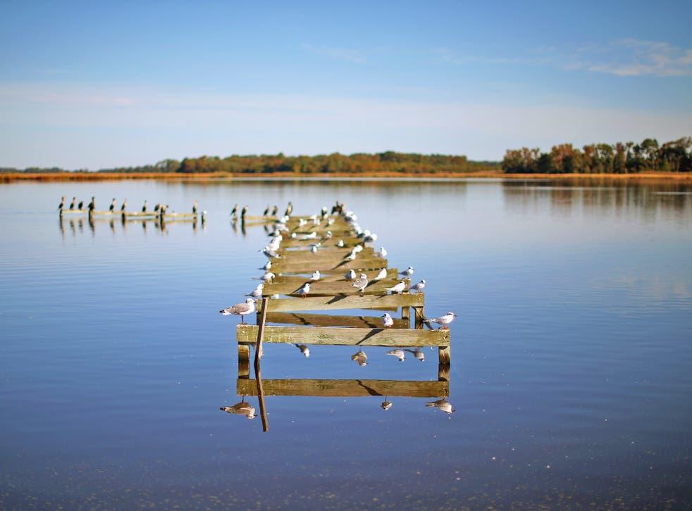 Birds occupy a dilapidated pier in Church Creek, Maryland