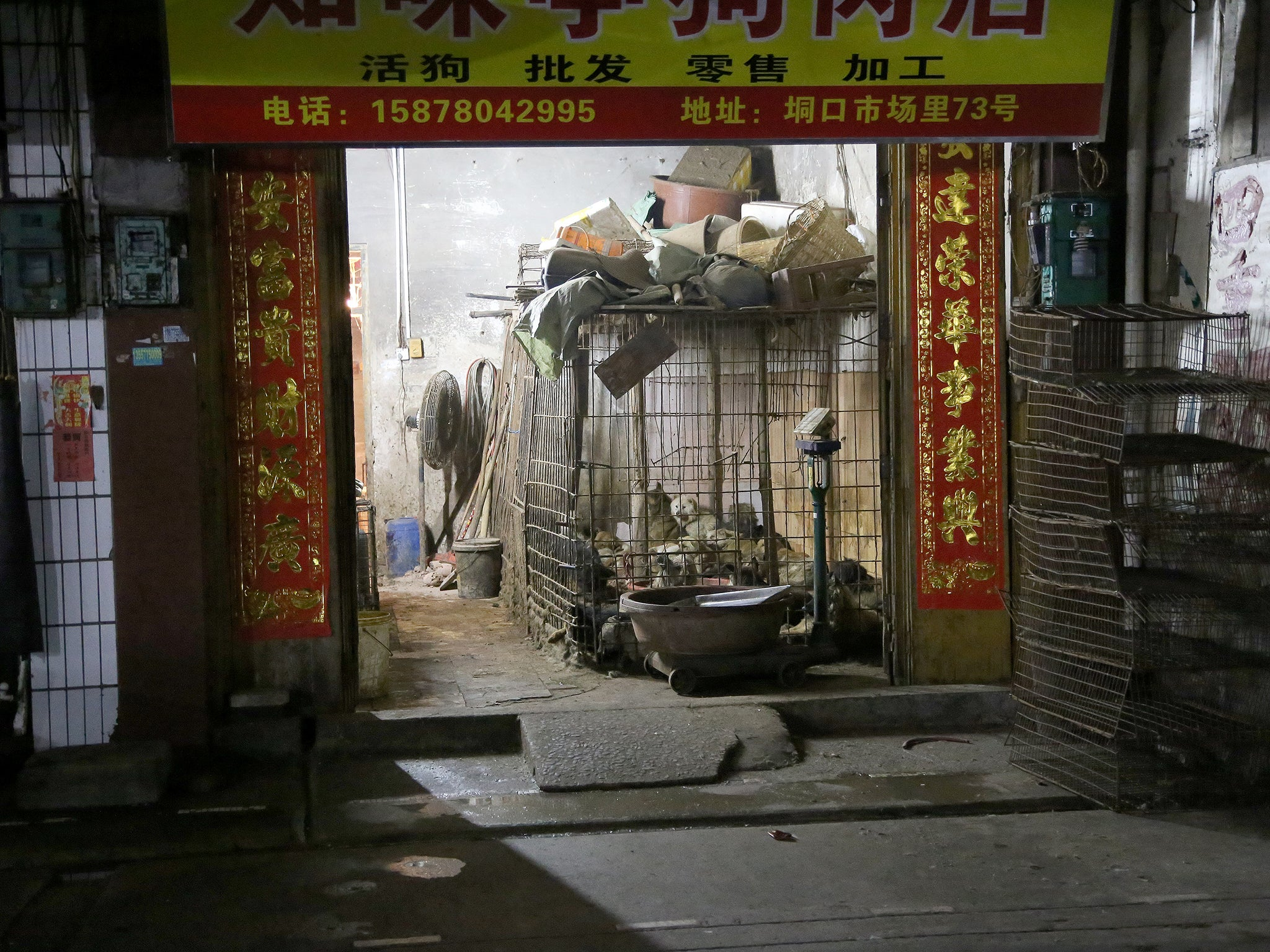 Dogs in holding pen at slaughterhouse, Yulin