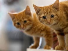 Brighton cat killer: Man arrested after death of 25 cats