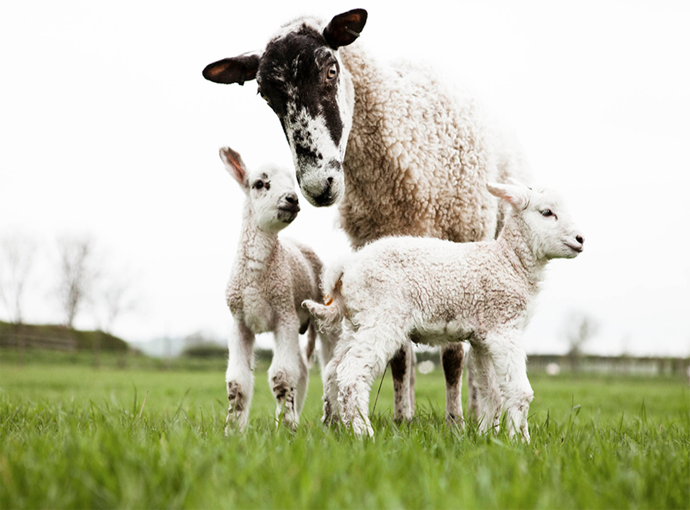 Daylesford's commitment to animal welfare goes beyond the requirements set by organic standards