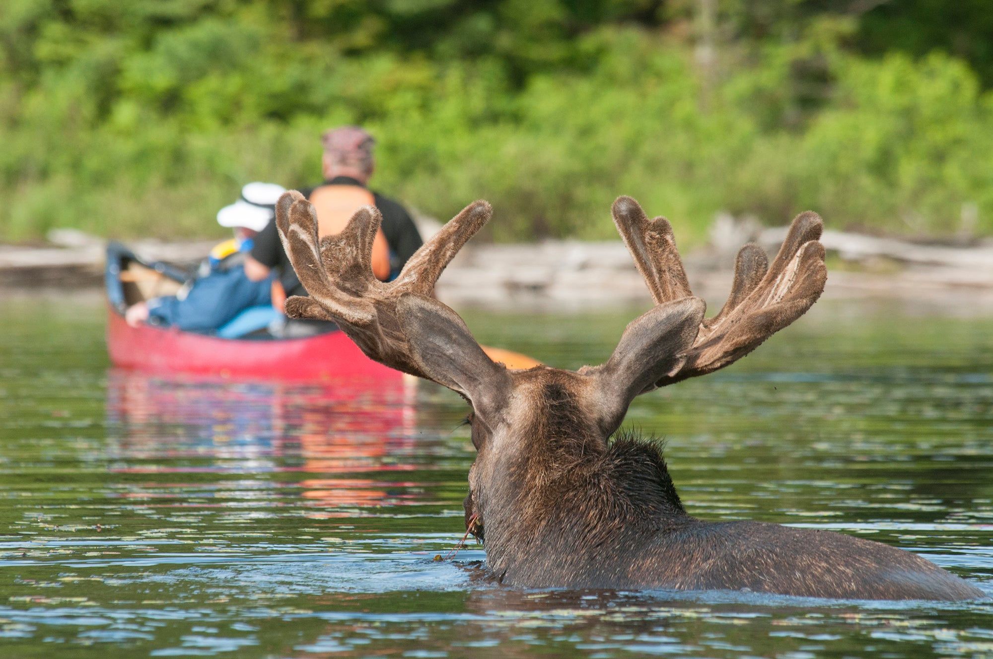 Answering the call of the wild: Canoeing in Algonquin Park