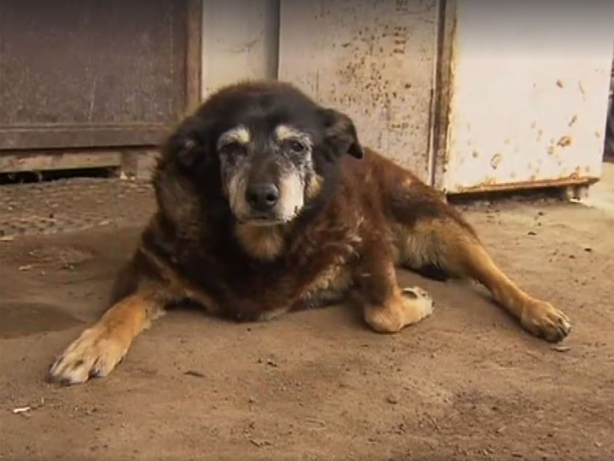 How Old Is The Oldest Dog On Earth
