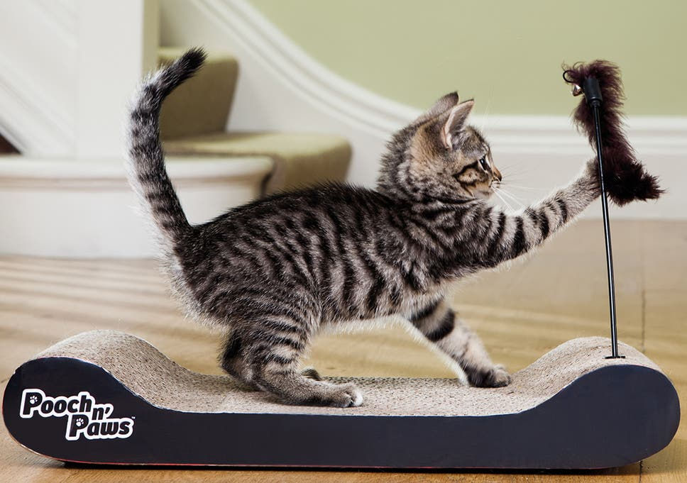 533f36dfd1 Help your kitty keep its claws in tip-top condition with the right plaything