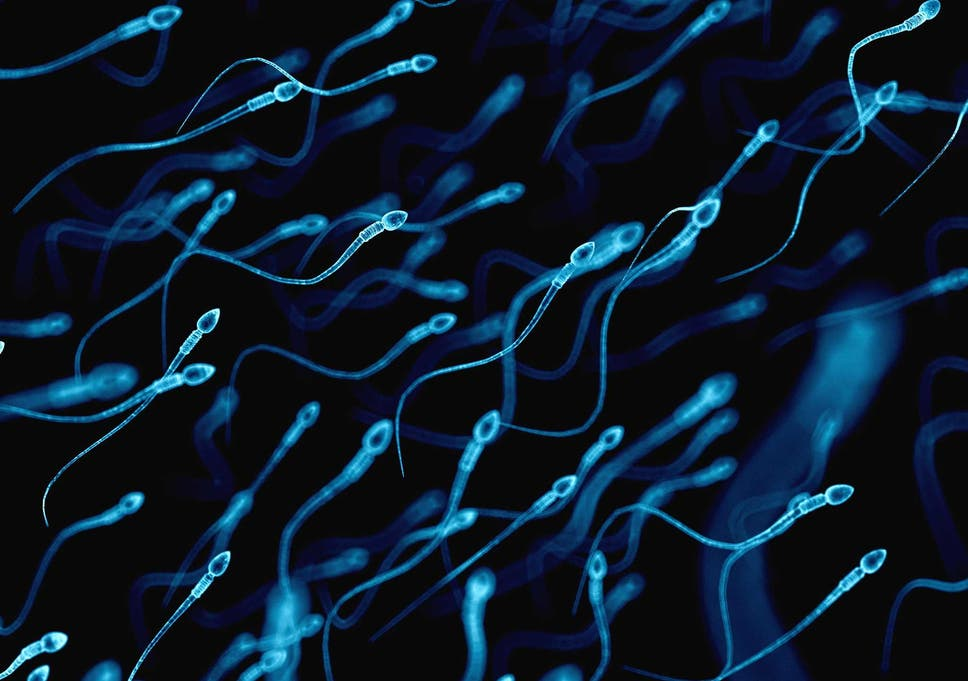 The ammount of cells in sperm