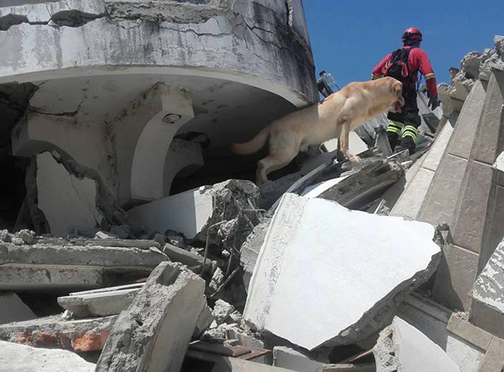 Rescue teams looking for survivors in Ecuador that killed 600 in April