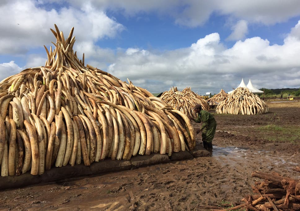 795bd714d19bb Kenya setting an example to the world with historic ivory burn