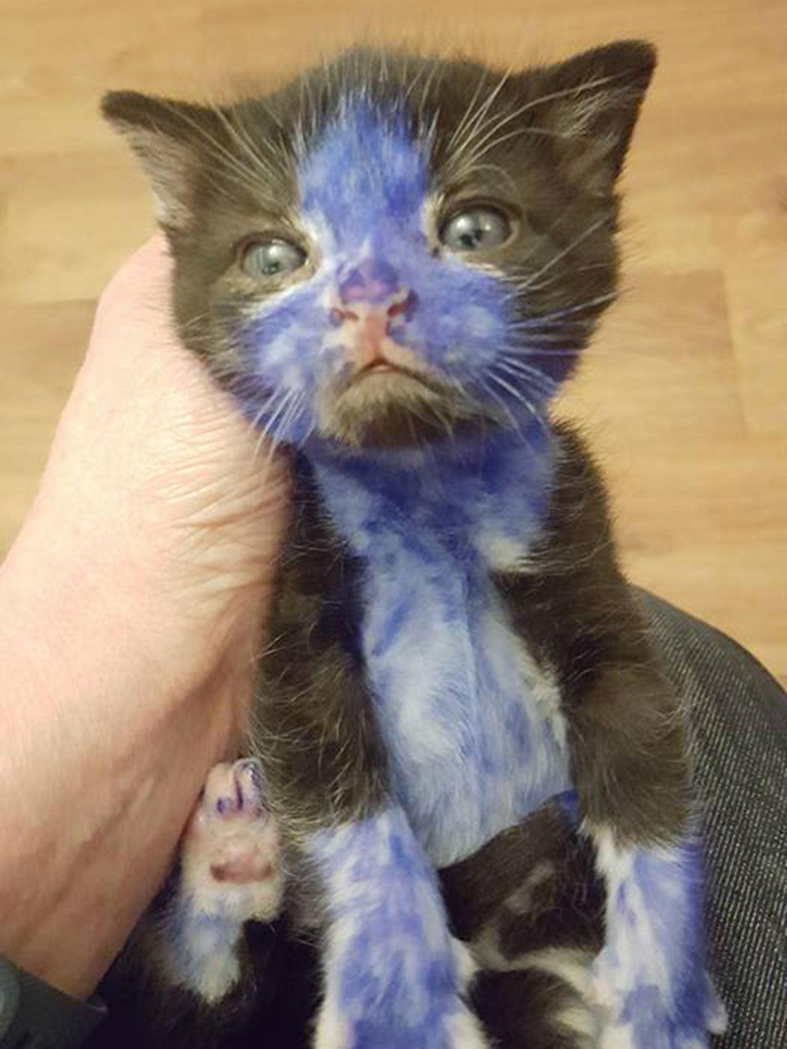 kittens coloured in with permanent marker in dreadful act of