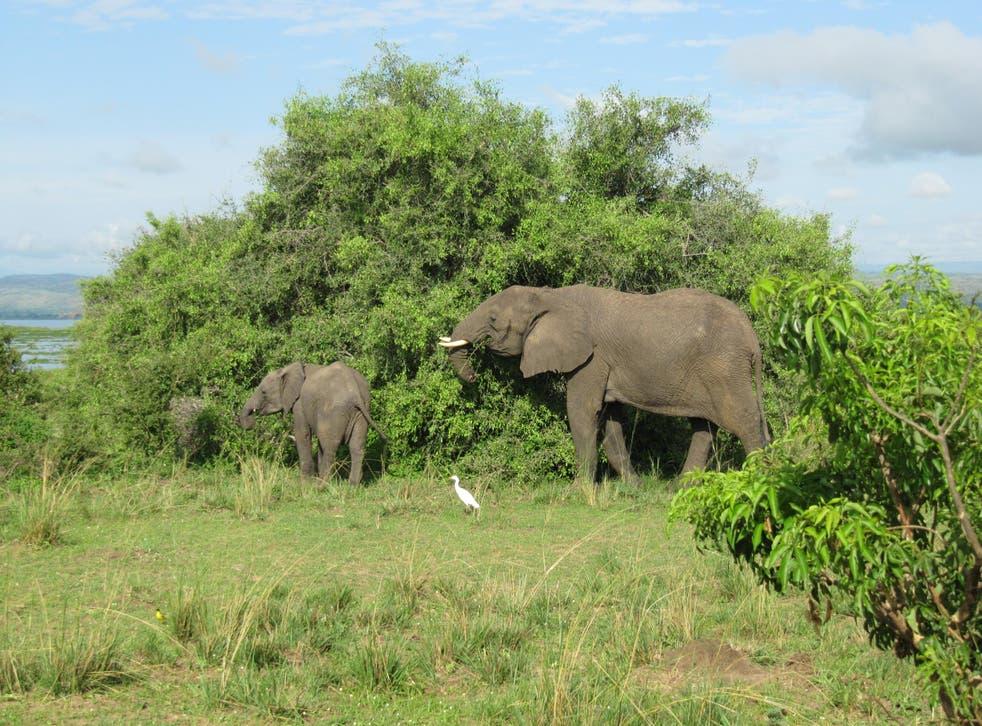 Uganda's Murchison Falls national park