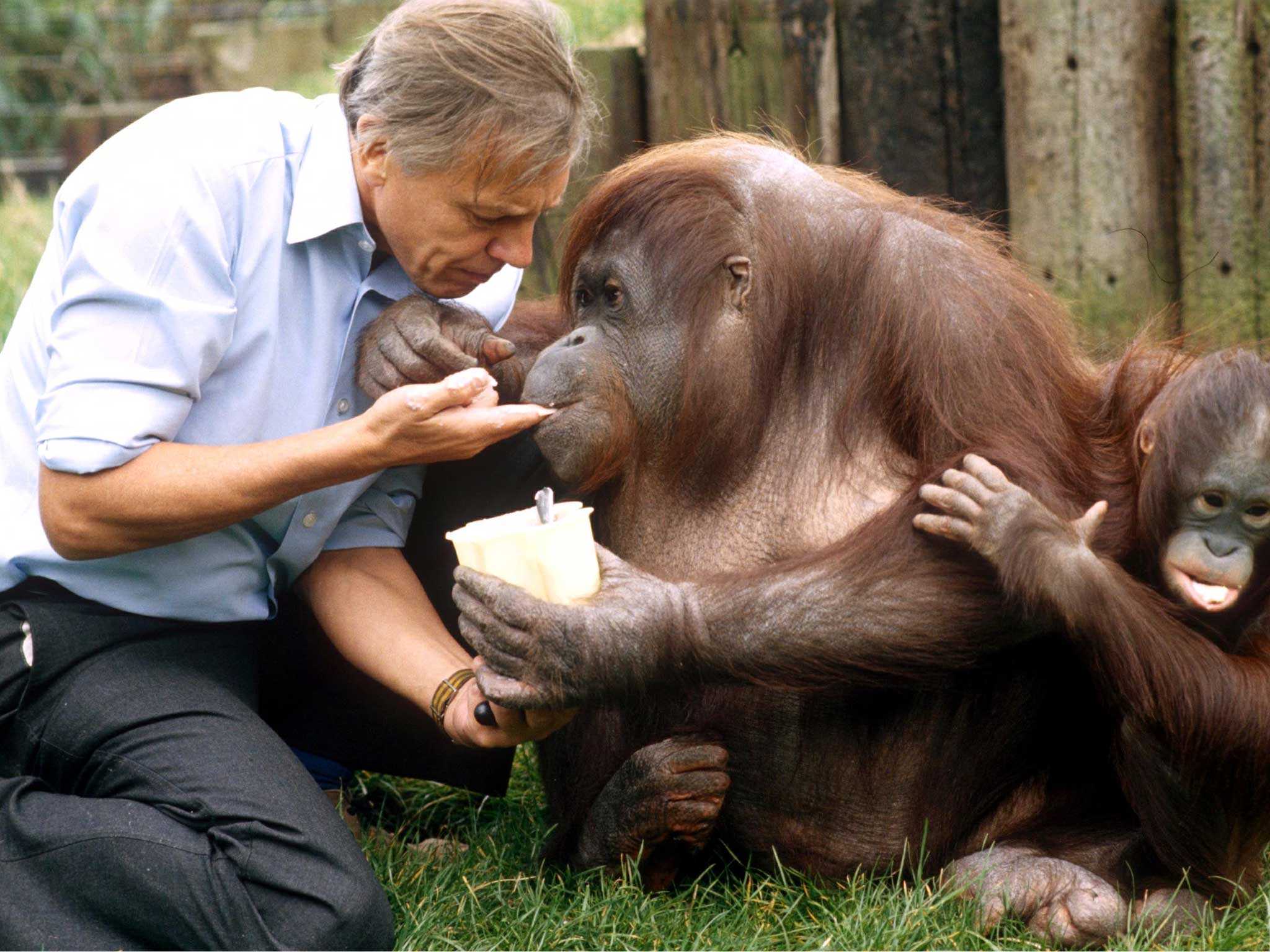 David Attenborough: 15 of the naturalist's best quotes | The Independent