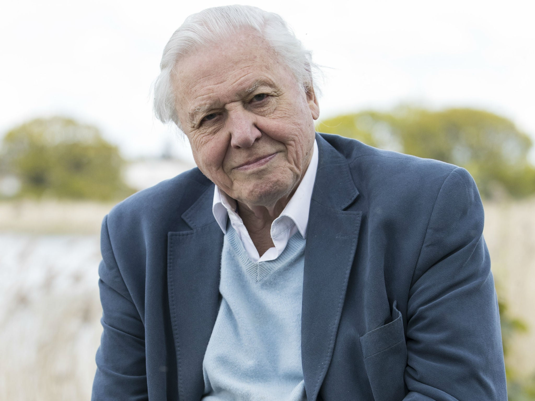david attenborough reveals the biggest regret of his long career the independent