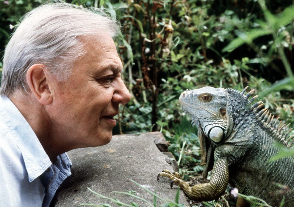 David Attenborough 15 Of The Naturalist S Best Quotes The Independent
