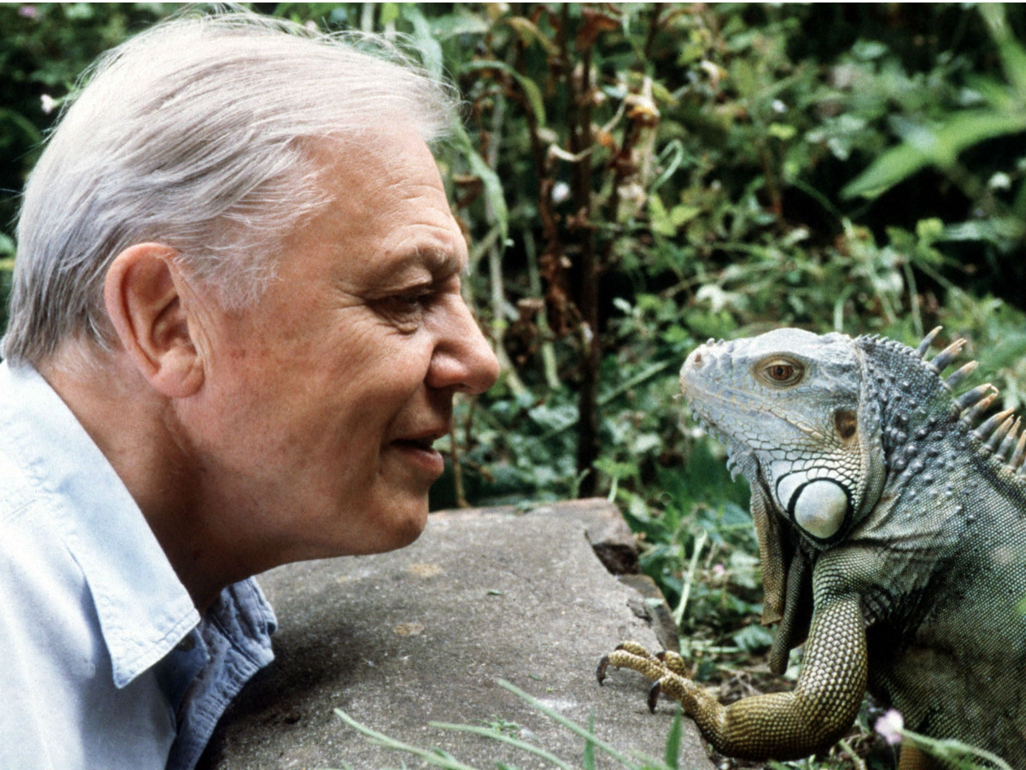 Sir David Attenborough at 90 interview: 'Retire? I'll never tire of the natural world' | The Independent