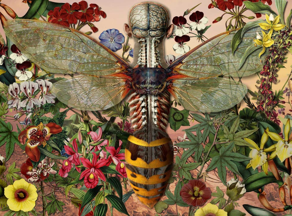 Biologists have argued that the human journey to adulthood is akin to an insects metamorphosis