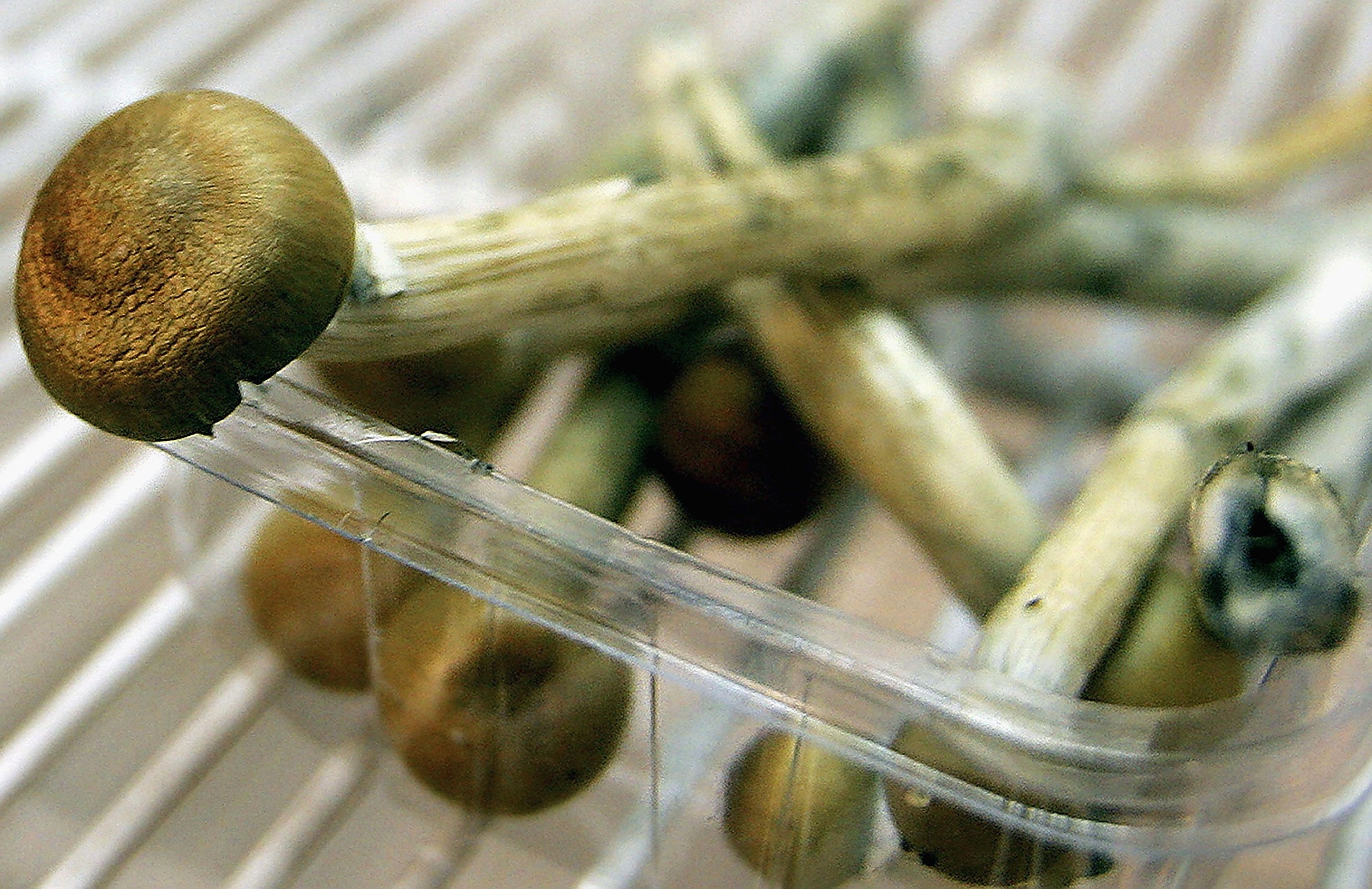 Magic mushrooms may ease anxiety and depression in cancer