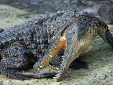Crocodile kills pastor as he baptises followers on lake