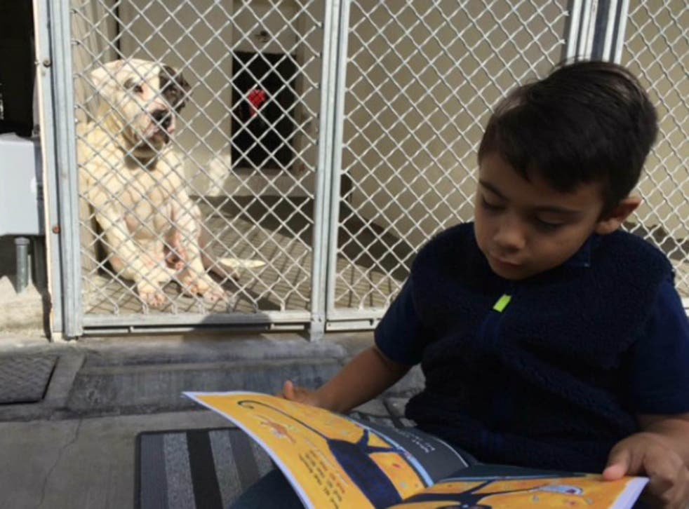 Jacob reading to one of the dogs at the Carson Animal Shelter, California