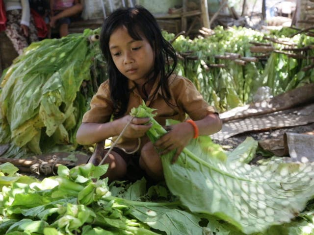 Brazil has implemented laws to protect children working on tobacco farms, and is hoping for similar laws to be applied in Indonesia