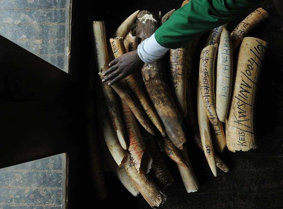 The UK government had pledged to launch a consultation about further restrictions on the country's ivory trade