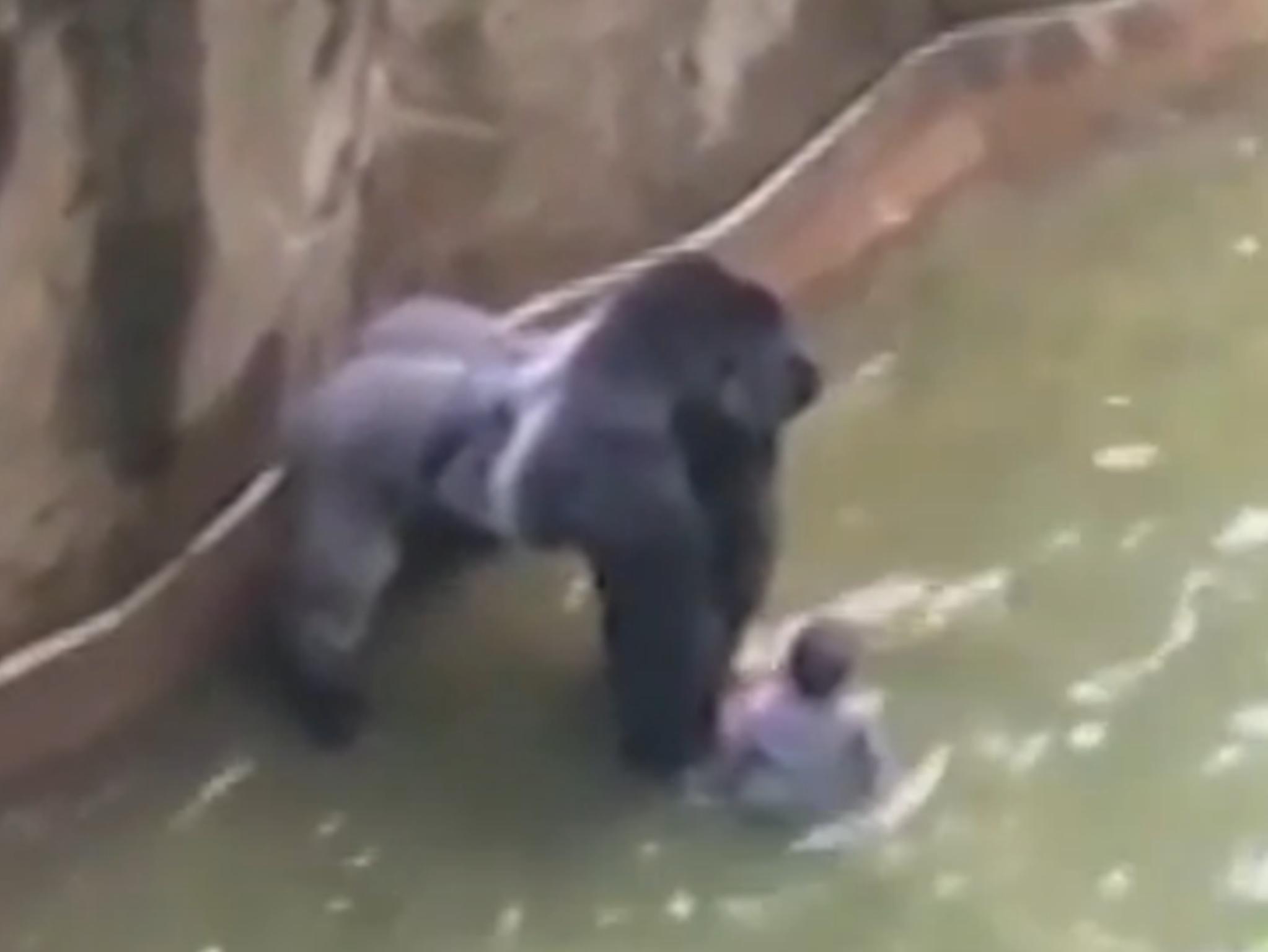cincinnati zoo mother of boy who fell into gorilla enclosure says